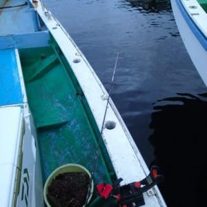 東京湾 タチ&アジリレー釣行記 14