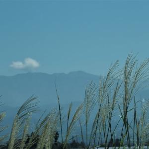 好天の日、白岩川のカヌー、稲刈りとシラサギ・・・富山市水橋