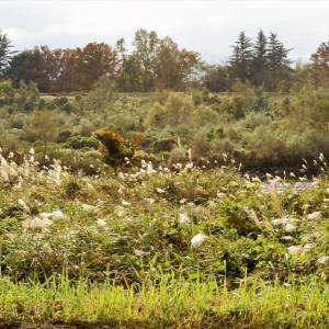 秋の日を受けて常願寺川を遡る・・・立山町・堤防道路