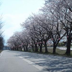 舟橋村の桜並木と公園・・・舟橋村