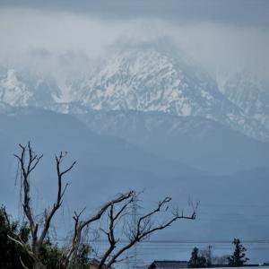 立山がよく見えない日の剱岳の早月尾根、花の季節は進む(葉桜、桃、石楠花)・・・富山市水橋
