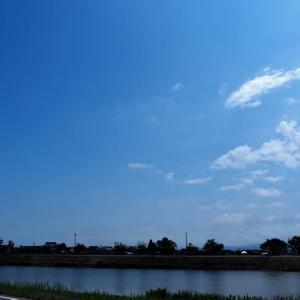 久しぶりに晴れた日、タイサンボク(泰山木)、アジサイ(紫陽花)・・・富山市水橋