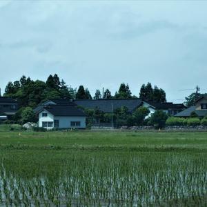田んぼも畑も順調に育つ・・・富山市水橋