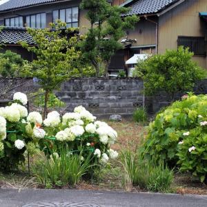 梅雨の合間に咲く花・・・富山市水橋、上市町