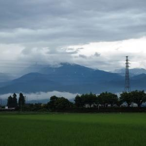 低く雲たなびき、まだ降り続く、ムクゲ、ノウゼンカズラ、黄色いユリ・・・富山市水橋