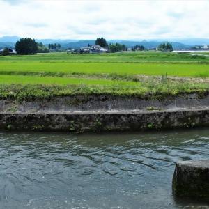 水豊かに流れ、植物は順調に育つ、だが(2)・・・立山町