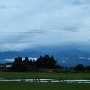 梅雨の合歓の花・・・富山市水橋