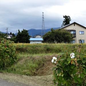 東福寺野の中腹から頂上へ、秋の気配濃厚(2)・・・滑川市 東福寺野