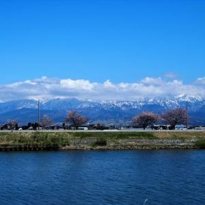 黄砂が消えて遠景もくっきり、桜散り始め、花々つぎつぎ咲く・・・富山市水橋
