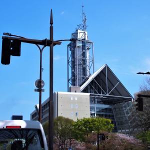 富山市役所の近辺松川べり、桜は散って若葉へ(1)・・・富山市