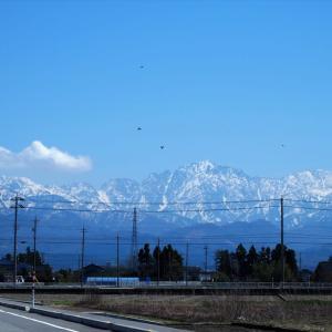 爽やかな晴れが続きます、春先の雪の山、若い緑、明るい花々・・・富山市水橋