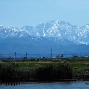 春の盛りから初夏へ、剱岳と白いドウダン・・・富山市水橋