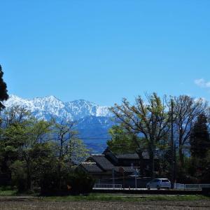若葉の風、鯉のぼり・・・富山市水橋