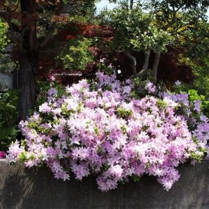 暑い日、5月の花・・・富山市水橋