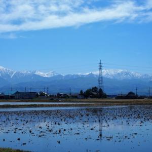 田植えを前にして田に水が入り、家々は水に浮くように見える・・・富山市水橋