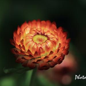 お散歩中に出会った花たち