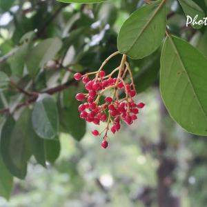 お散歩写真いろいろ・・・赤い花、赤い実