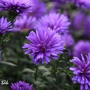 お散歩中に出会った花たち(1)