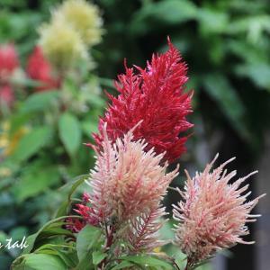 お散歩中に出会った花たち(2)