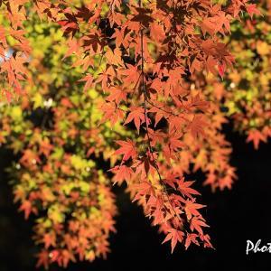 秋の風景@神宮外苑