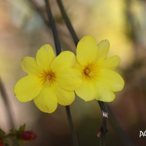 黄色い花いろいろ@フラワーセンター