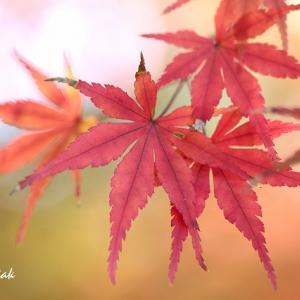 紅葉(4)・・・鎌倉