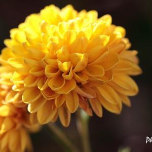 マイガーデンのお花たち(2)