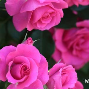 お散歩中に出会ったお花たち(1)・・・フラワーセンター