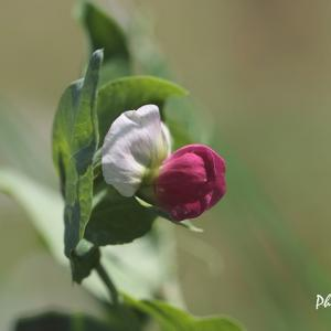 お散歩中に出会ったお花たち(2)・・・フラワーセンター