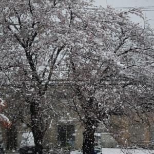 春の大雪!!