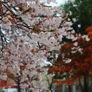 今年の春は〜〜なんだか!!