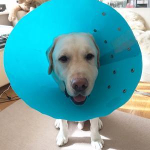 犬の歯は強いと思っていますか?