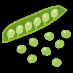 グリーンピースの収穫はもう大変