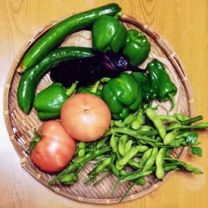 毎朝の菜園作業は心身の健康維持に寄与してる