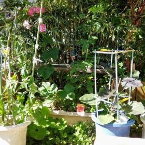 庭に細々とプランター菜園を作った