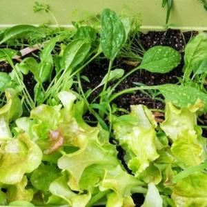 今年の庭は夏野菜でいっぱいに
