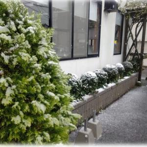 3月29日(日)梅のつぶやき