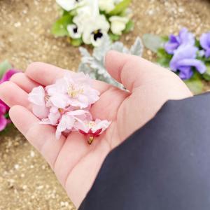 """春らしくなりましたね~3月の空き状況~"""""""