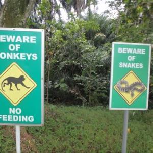 マレーシアで「森の精」に出会ったお話。シニア時事(ジジ)の戯言なり。