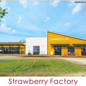 明日はstrawberryfactoryで出店します♪