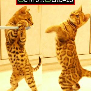 子猫の成長