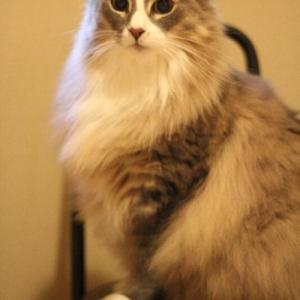 みなさまに好まれるネコ写真とは?