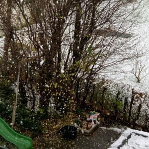 初雪といろいろ