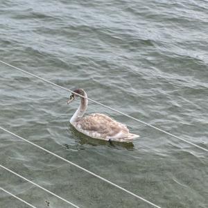 1℃の湖畔散歩