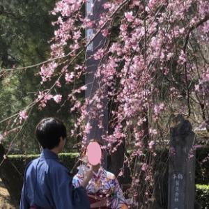 桜が咲き始めました〜🌸