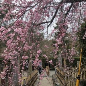 桜の季節に…