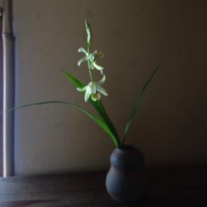 シランと紫陽花の季節
