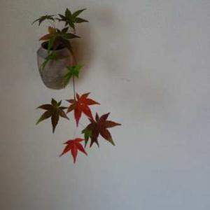 紅葉も名残りの候となりました