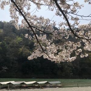 桜の樹の下で〜 篠笛の音色part2