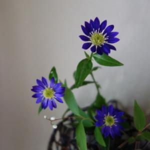 お庭のお花を楽しむ